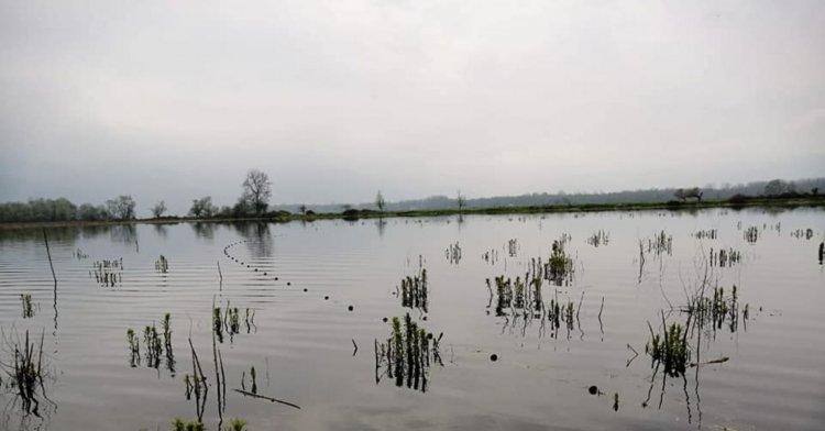 Efteni Gölü'ne 800 metre kaçak ağ atmışlar!