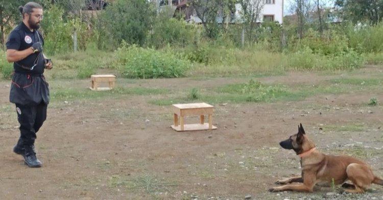 Can kurtaran köpekler iki yıl eğitiliyor!